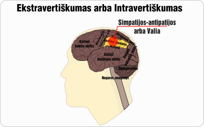 ekstravertiskumas intravertiskumas schema